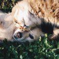 santé animaux de compagnie