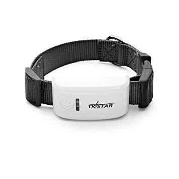 Le collier GPS, un excellent accessoire de liocalisation de votre animal de compagnie